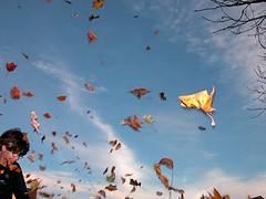 Eric with leaves in the air (Mr. Physics) Tags: family blue autumn boy sky motion male fall nature leaves clouds ilovenature photography play air flash youngman msoller colorphotoaward aplusphoto