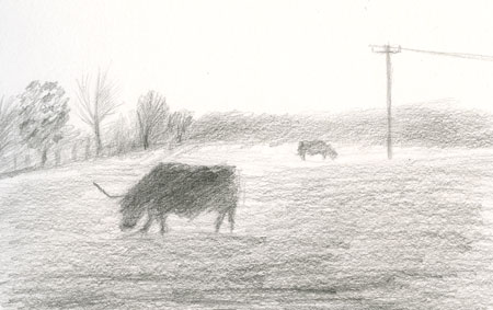 foggycattle