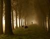 Mist op dijk (Jean de la Tête) Tags: holland fog explore dike olanda zeeuwsvlaanderen instantfave specnature diamondclassphotographer janho boefter wtmwgroupicon adoublefave elitephotography thesecretlifeoftrees alemdagqualityonlyclub