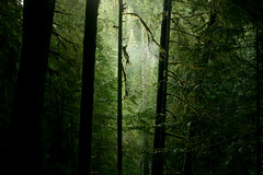 Forest mist (Simple Insomnia) Tags: park mist nature wet rain forest dark moss moody national jungle olympic peninsula atmospheric pfevergreen pfemerald primevalforestgroups