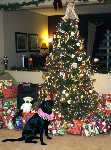 black lab - christmas