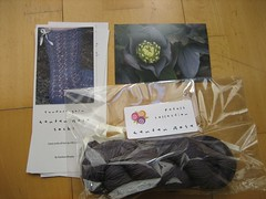 Petals collection, lenten rose