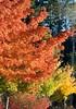 Red Light Green Light - Southwest Washington (pomegranatecreations) Tags: bestnaturetnc06