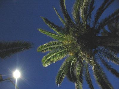 Palmier sous la lune ;-)