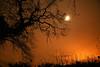 Winter oak, Norfolk (RoryO'Bryen) Tags: longexposure light moon tree night canon oak norfolk rory stunning eos5d obryen aplusphoto roryobryen goldenphotographer roarsthelion copyrightroryobryen