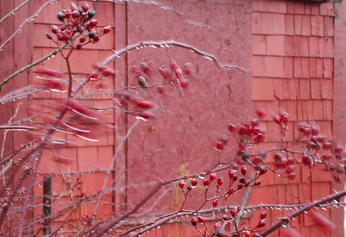 Red rainy day
