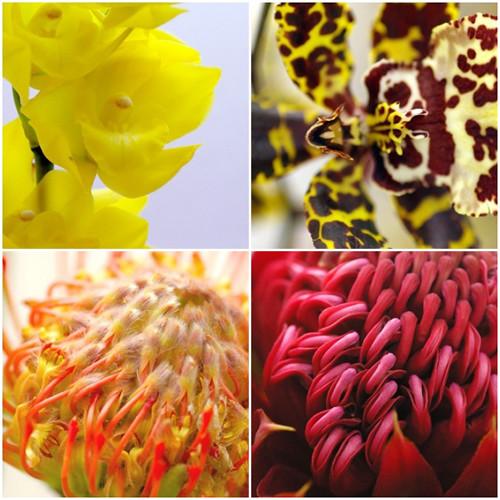 12種類の蘭とネイティブフラワーたち