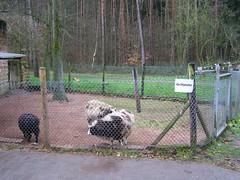 zoo_siegelbach