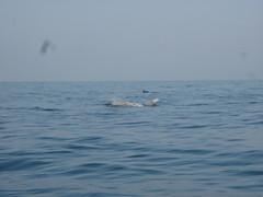 Dolphin Trip13