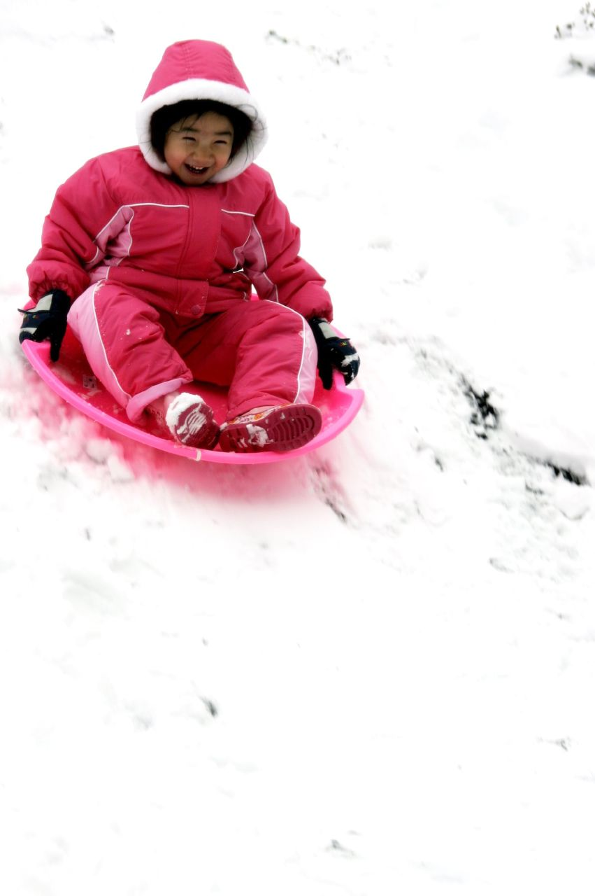 Raeven on the sled