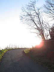 The way up to the sun... (Matzilla) Tags: vineyard weinberg rck matzilla