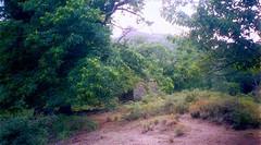 L'autre bergerie de Campi Solcu vers 720 m