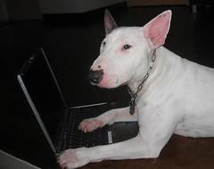 Laptop & me2