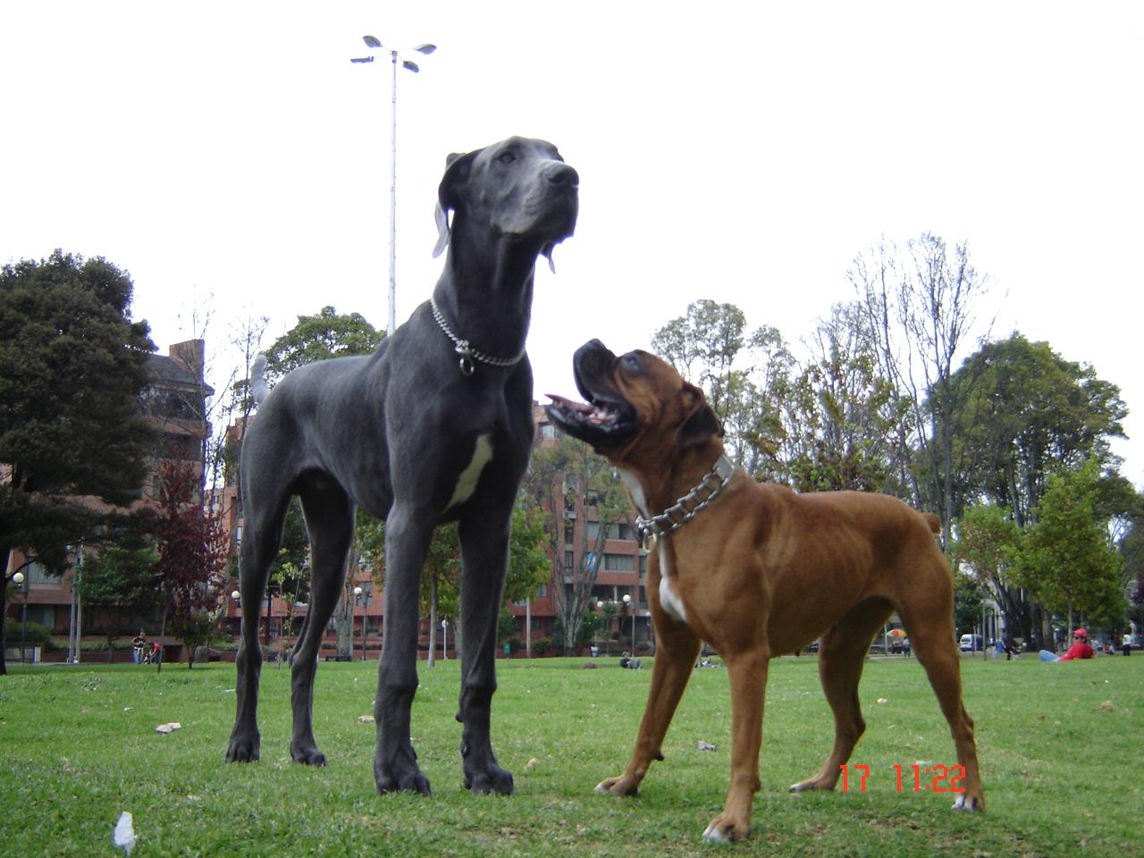 10 Perros Guardianes más Peligrosos