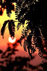 at Laos. (mindz420) Tags: world travel sunset colour art sunrise high quality images we only awards laos atardeceramanecer
