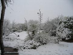 yucca_snow