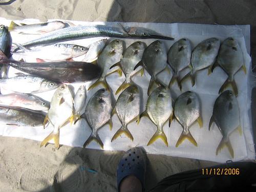 fishing 11/12/2006