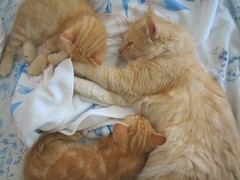 Cat Family (Gui, o gato) Tags: family pet cats cute animal cat kitten chat kitty gato gatto katzen cc200 kissablekat bestofcats kittyschoice ibybvd077 camffeb petscommunity guiogato pet500