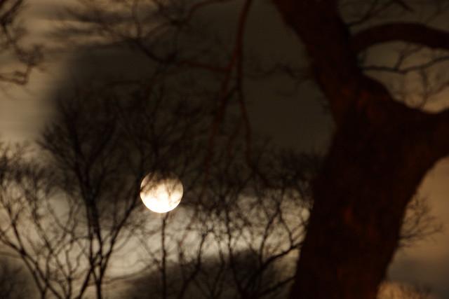 不吉な月光