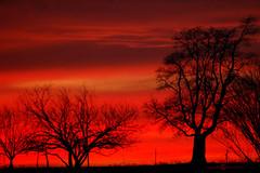 Texas Sunset II (Melissa_A) Tags: trees sunset red sun silhouette night clouds d50 fire nikon bravo texas searchthebest helluva naturesfinest melissaa splendiferous outstandingshot anawesomeshot impressedbeauty superaplus aplusphoto ultimateshot