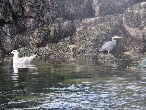 A Heron. Plus, as an added bonus, a Seagull. Now How Much Would You Pay?