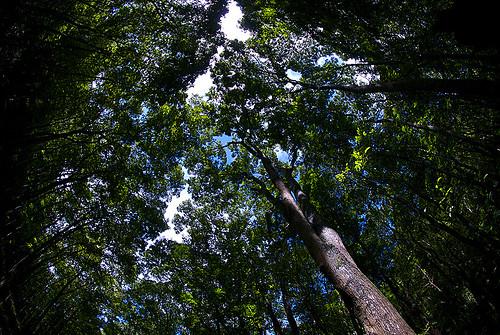 388282751_f0cfcf824b - Thick Forest in Bilar, Bohol - Bilar - Bohol
