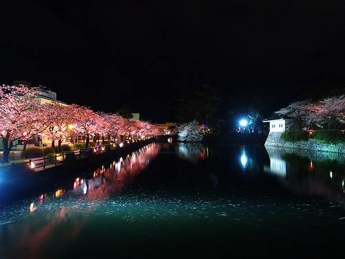小田原城夜桜 1