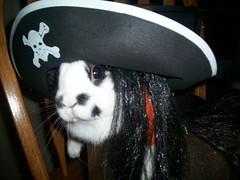 Pirate Umlaut (okac) Tags: rabbits