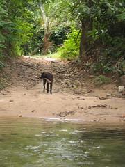 Собачка изучала нас с берега.