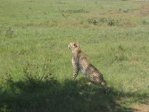Tanzania e Kenia 384