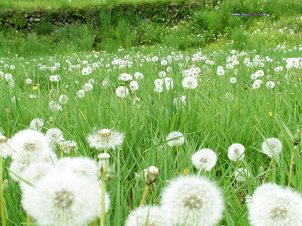 http://farm1.static.flickr.com/132/412361244_70c9c44020_o.jpg