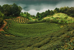Tea garden (xie-wei) Tags: yourwonderland sailsevenseas