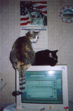 "Cats on ""Old Monitor"""
