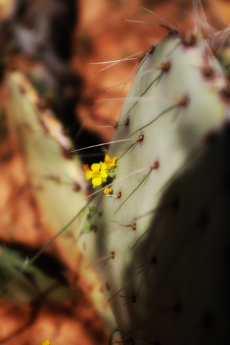 Little Yellow Fower