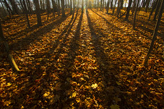 In Between (Matt Champlin) Tags: inbetween sunset woods woodland hunting peace peaceful fall autumn winter canon 2016 december shadows longshadows leaves foliage forest