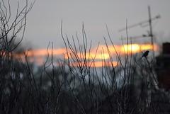 Sunrise (Dun.can) Tags: december garden sunrise dawn sunlight robin bokeh