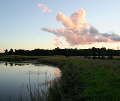 Lambs.. (ZeiR) Tags: park sunset water clouds island nationalpark move lambs ruissalo