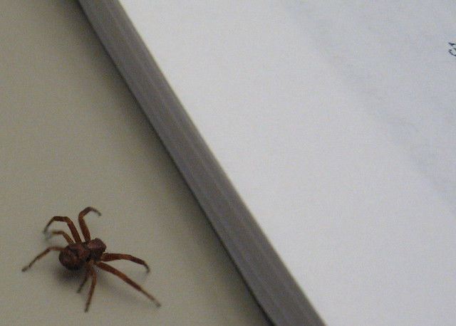 Spider on Desk