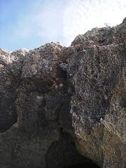 IMGP0051 (武蔵大学サイクリング部2001-2005) Tags: geotagged scenery miyakojima cyclememories1a nagamahama geo:lon=125240686 2006cyclolkyoudai geo:lat=24729691 miyakojimascenery