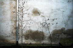 Painting in the backyard (Markus Moning) Tags: plants texture wall facade painting backyard pipe pflanzen rohr canoneos350d thewall lithuania downspout fassade mauer hinterhof kaunas moning ilmuro lietuva gemlde litauen cotcmostinteresting verputz markusmoning ablaufrohr