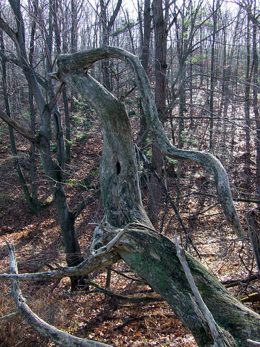 locust roots 3