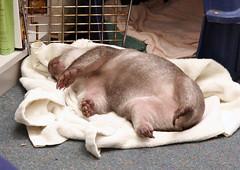Jody takes a nap