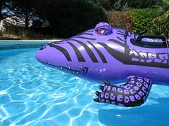 Paarse krokodil bron: flickr