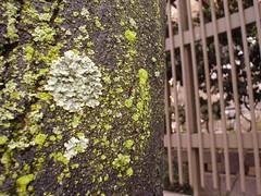 lichen 12-27-06
