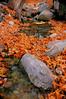Miller Canyon (drfizzics) Tags: autumn arizona fall leaves leaf fallcolors millercanyon bestnaturetnc06 bestnaturetnc07