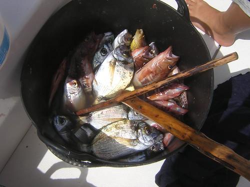 Variedad de pescado.