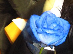 "blue rose • <a style=""font-size:0.8em;"" href=""http://www.flickr.com/photos/70272381@N00/347277603/"" target=""_blank"">View on Flickr</a>"