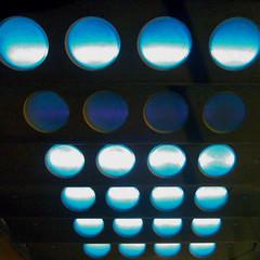 blue spots - by Yersinia