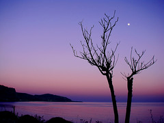 Moon on the trees (esther**) Tags: pink blue sunset sea sky moon tree beach nature island bravo purple greece topf150 topf100 rhodes topf200 interestingness5 interestingness8 magicdonkey instantefaved