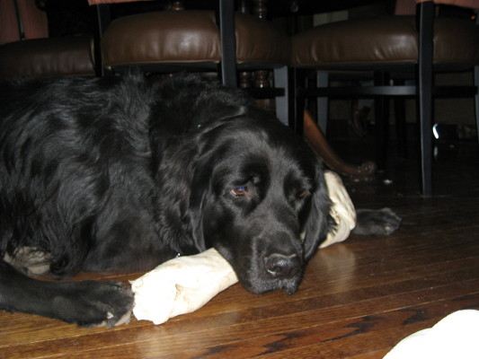 Charlie and his bone, Dec 06